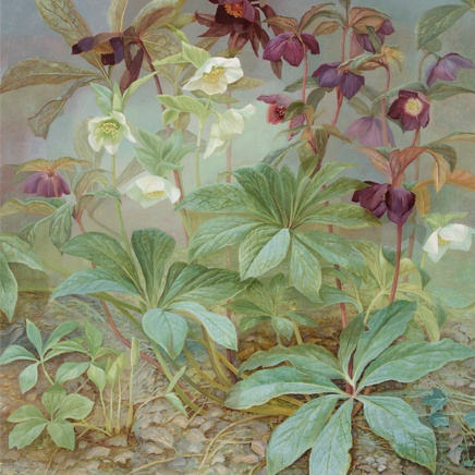 Jane Wormell - Hellebores Euphorbia and Ivy