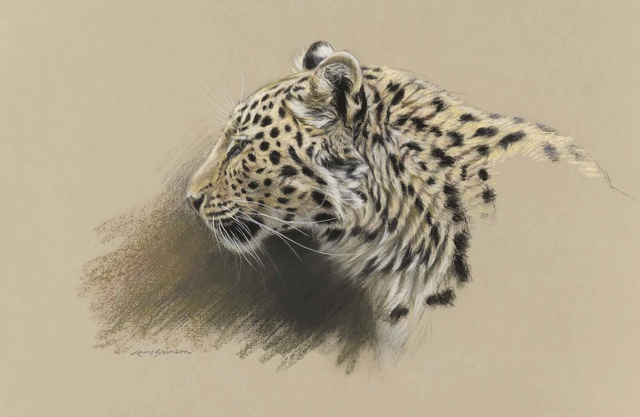 Gary Stinton, Study of Amur Leopardess' Profile, pastel and charcoal on paper, 12 x 18ins (30.5 x 45.7cm)